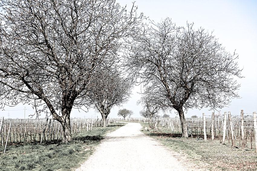 Angi Huber, Salzburg, PR und Kommunikationsdesign, Textierung und Fotografie für das Weinjournal von INTERSPAR